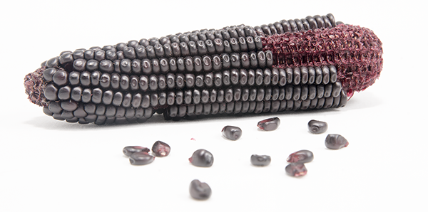 Italian Purple Corn